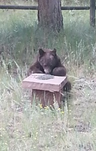 Right outside the kitchen, actually the second bear we've seen while here
